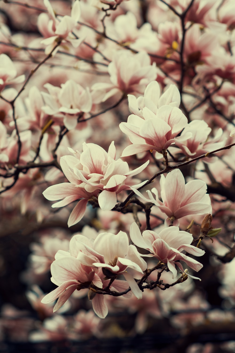 shallow focus photography of pink petal flowers
