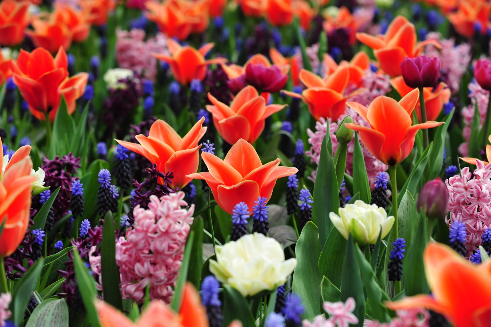"""Nikon D700 sample photo. """"Assorted-color flowers in bloom"""" photography"""