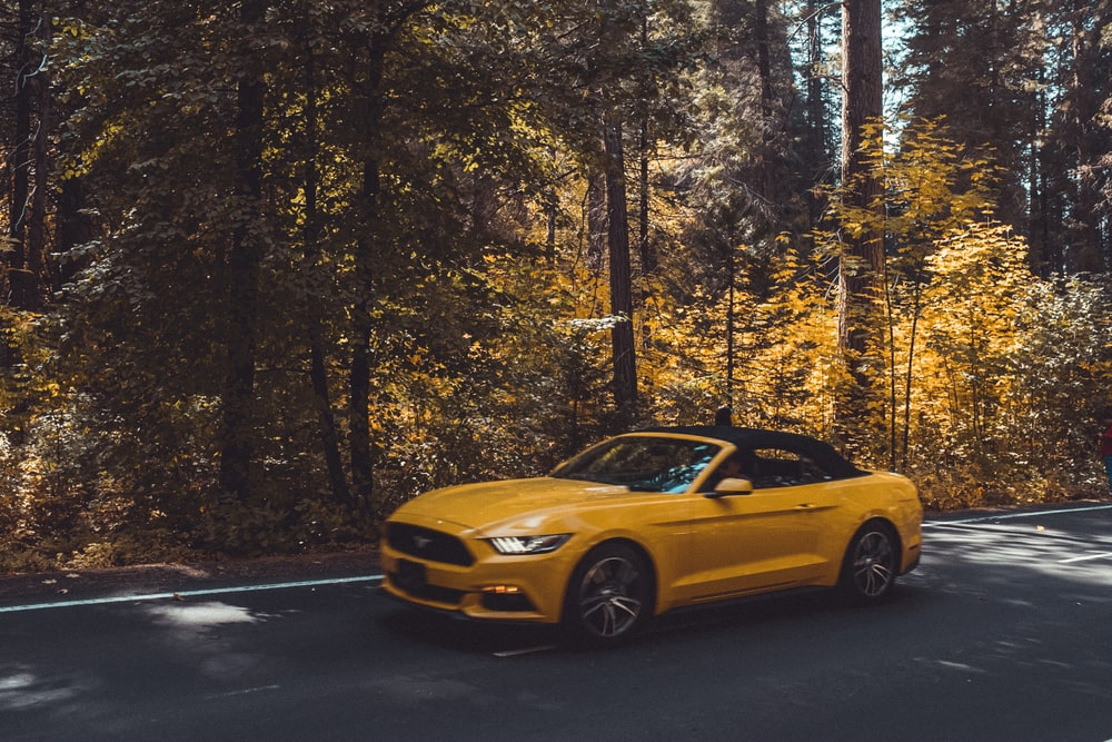Ford Mustang on road surrounded by trees