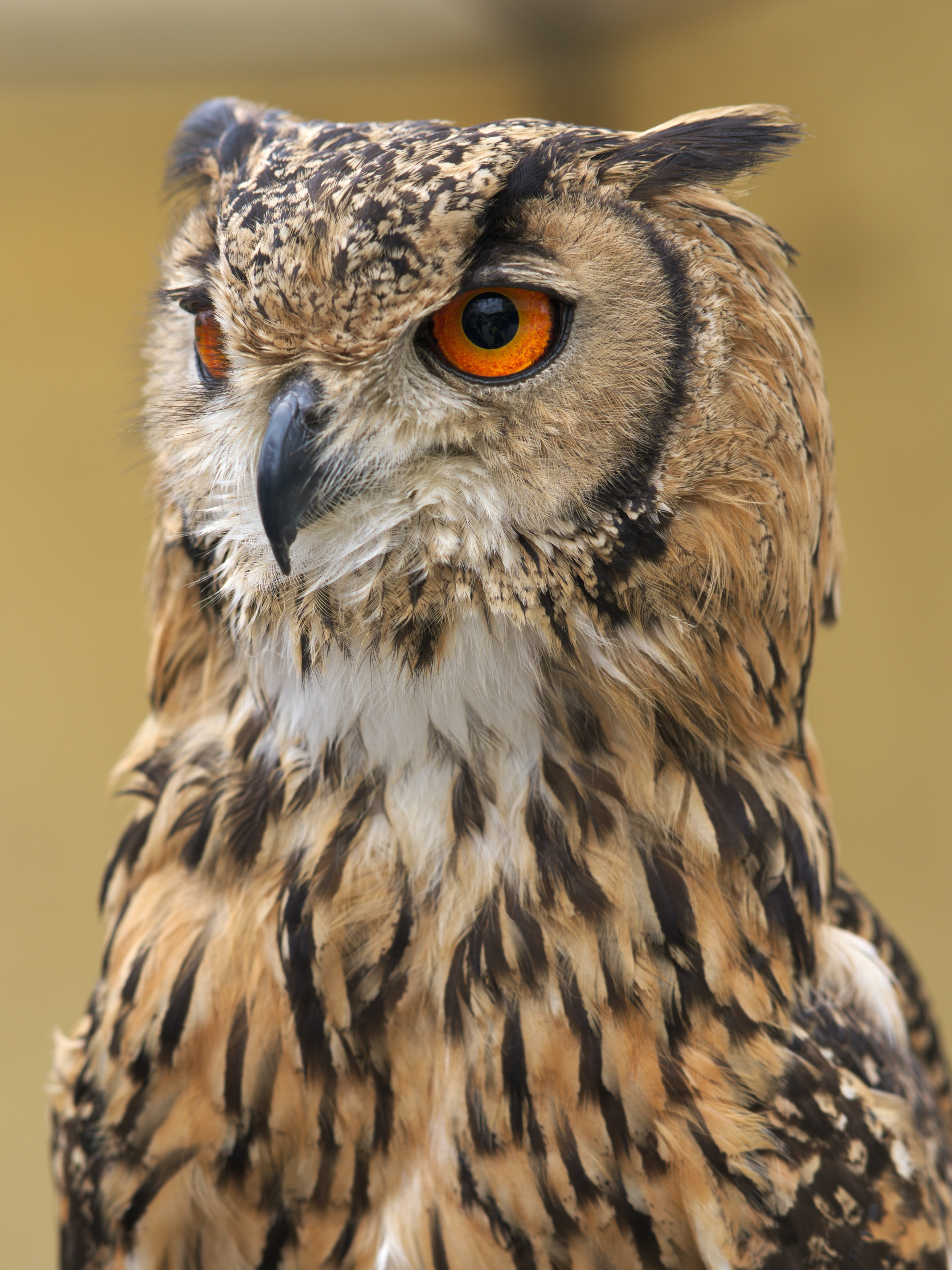 selective focus photography of brown owl