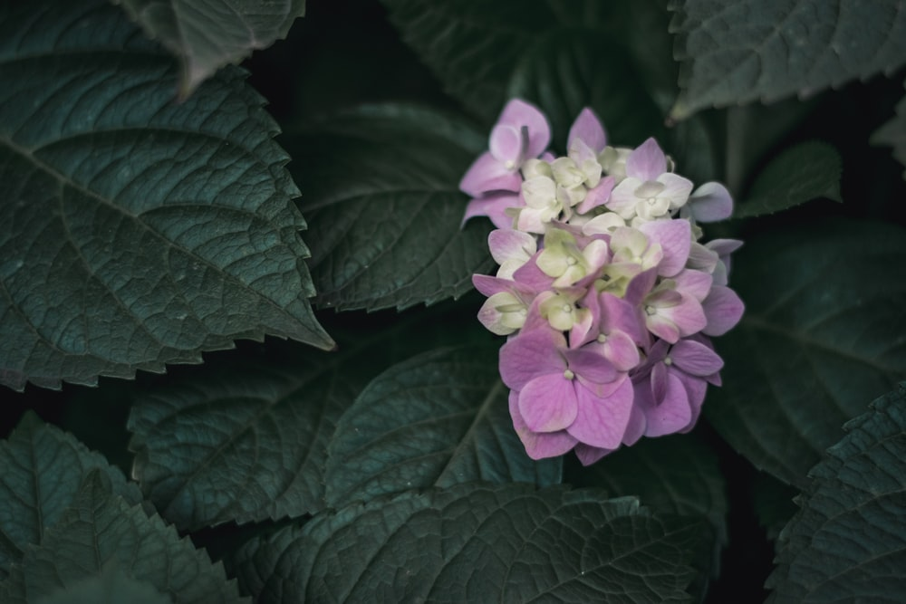 purple flower with green leaves