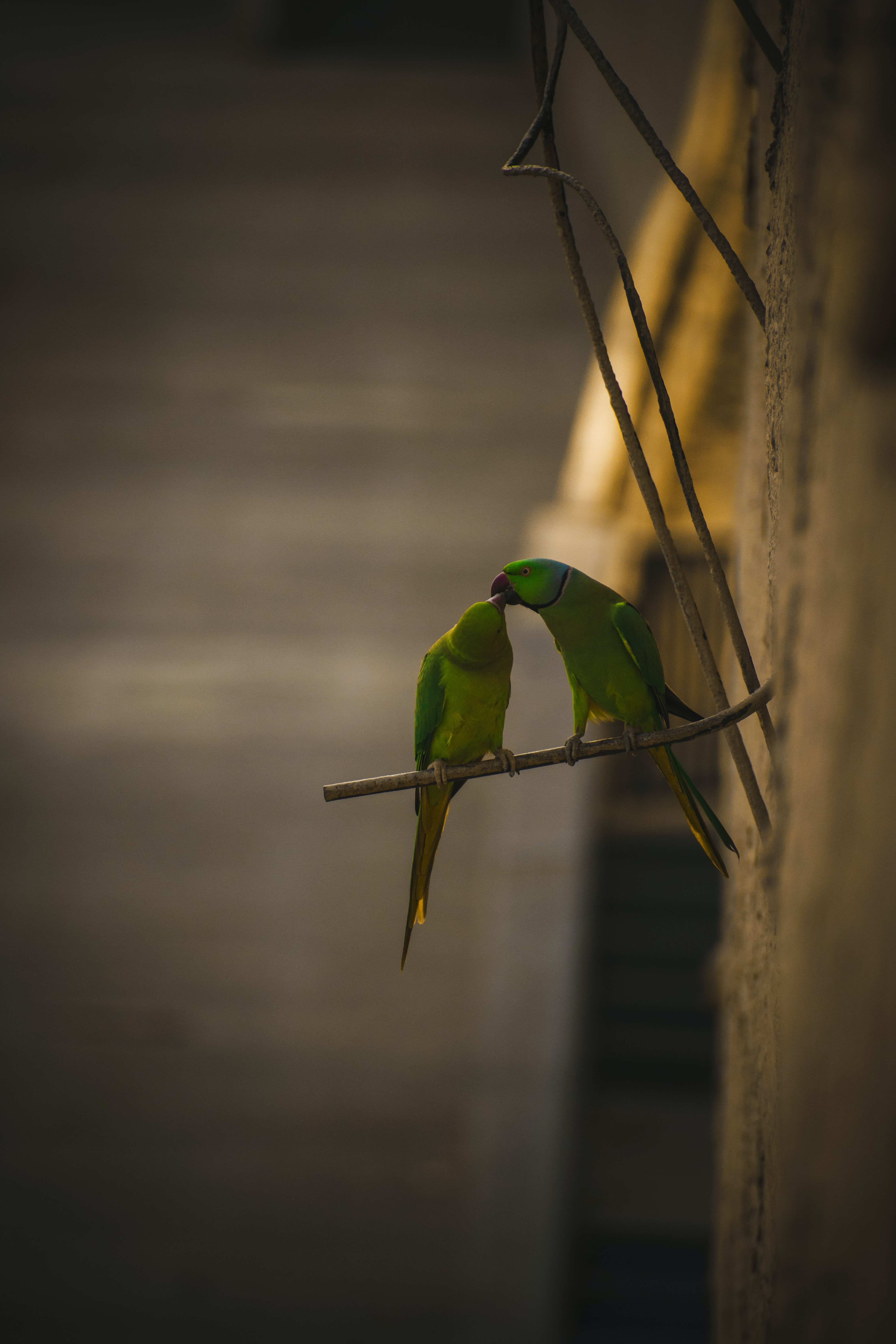 two rose-ringed parakeets perched on metal bar