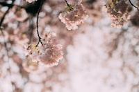 close up photo of white petaled flower