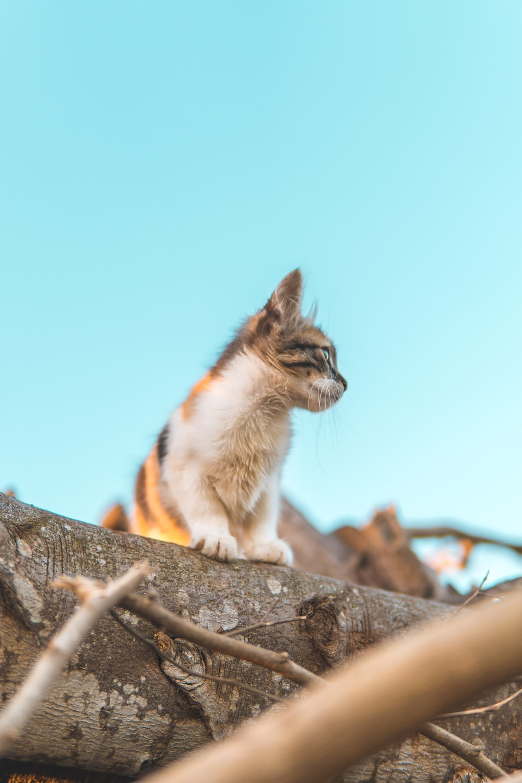 cat standing on tree log