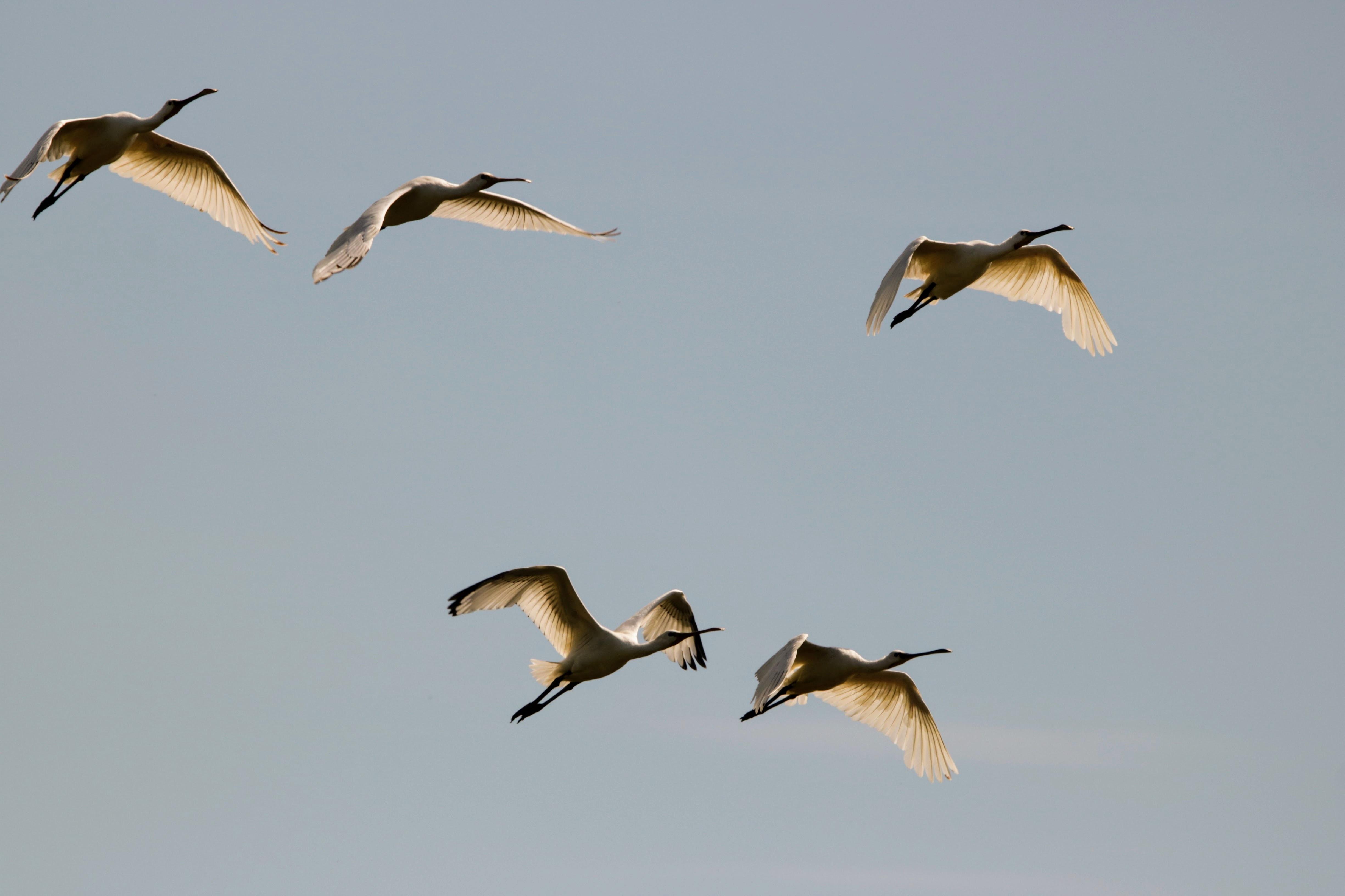 flock of birds in mid air