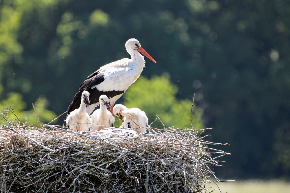 shallow focus photography of white and black bird standing on nest