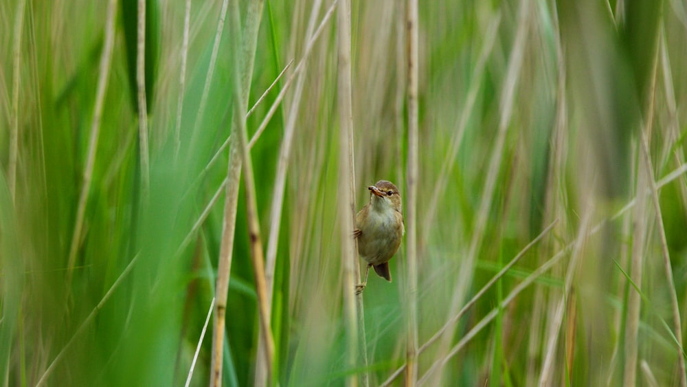 bird perched on grass