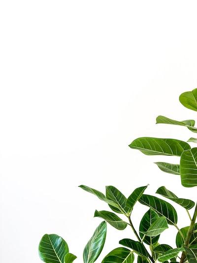 Green minimalism