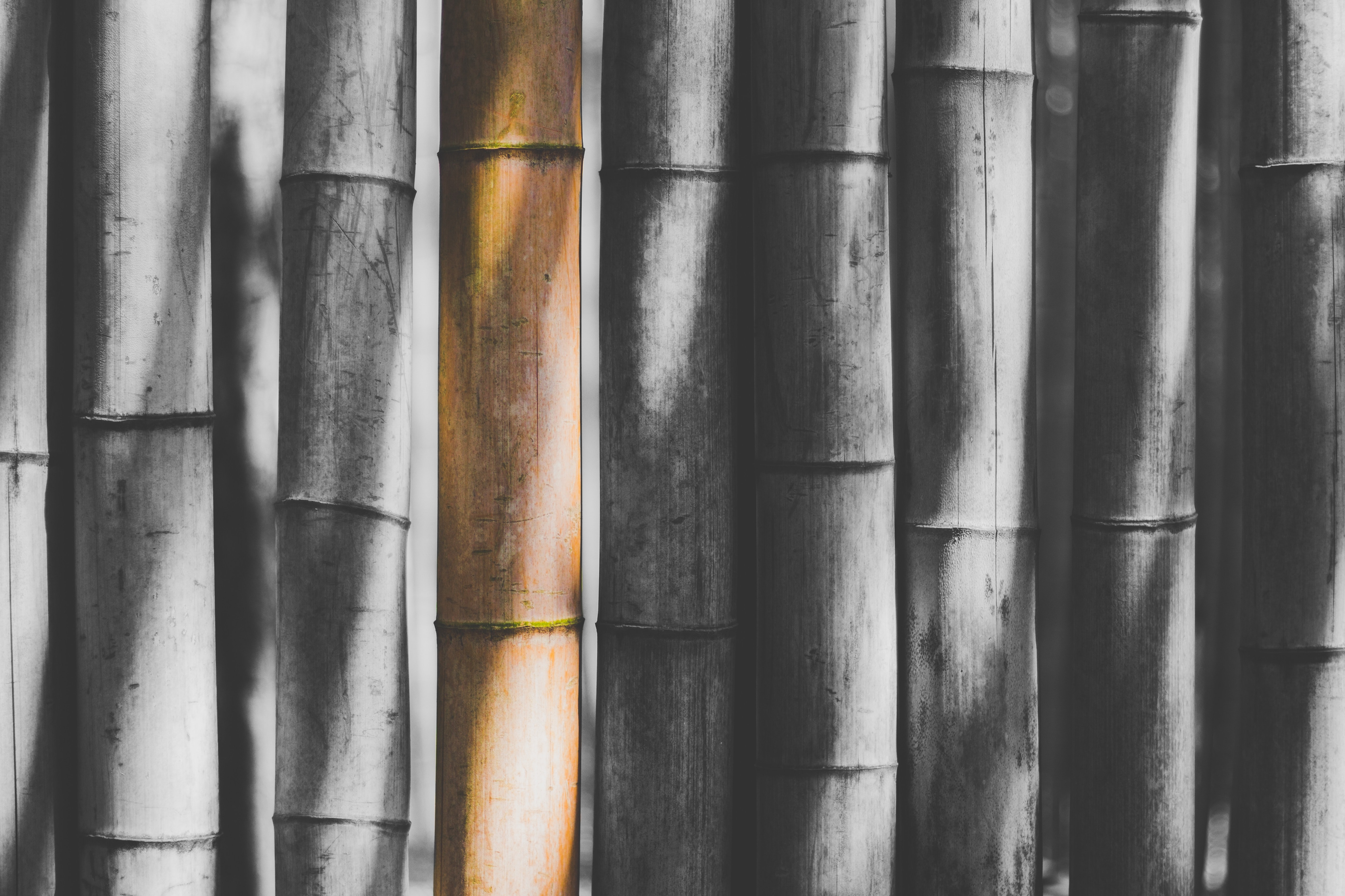 selective color photography of bamboo stick