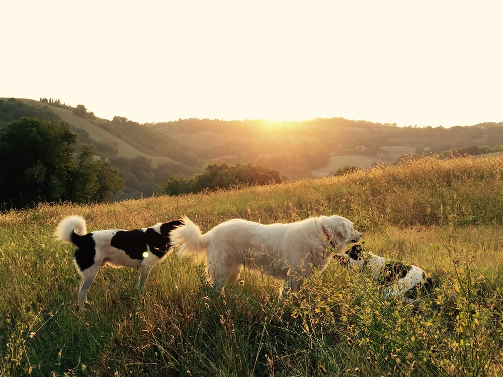 photography of three playing dogs on grass field
