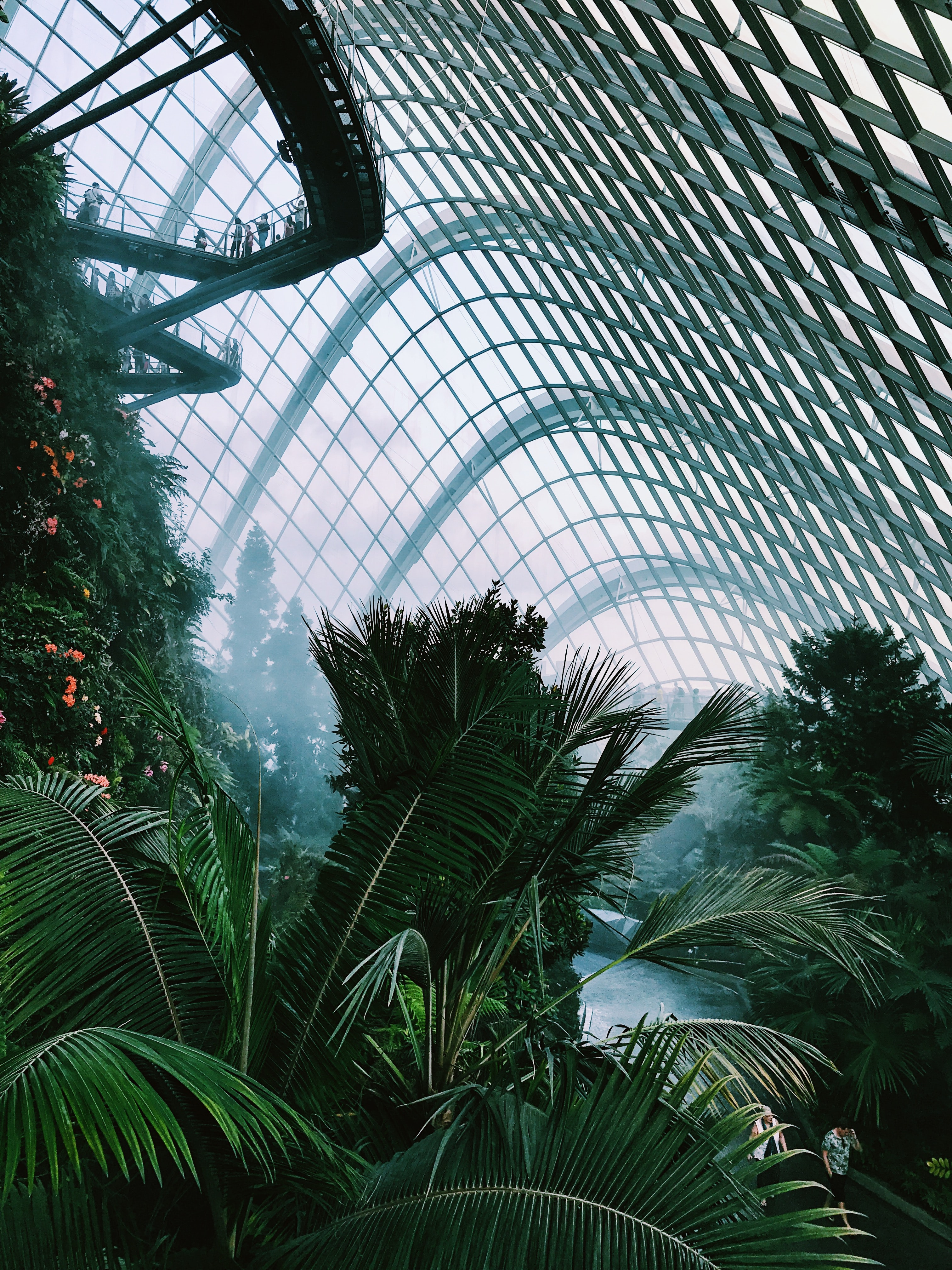 photo of coconut tree inside clear glass dome