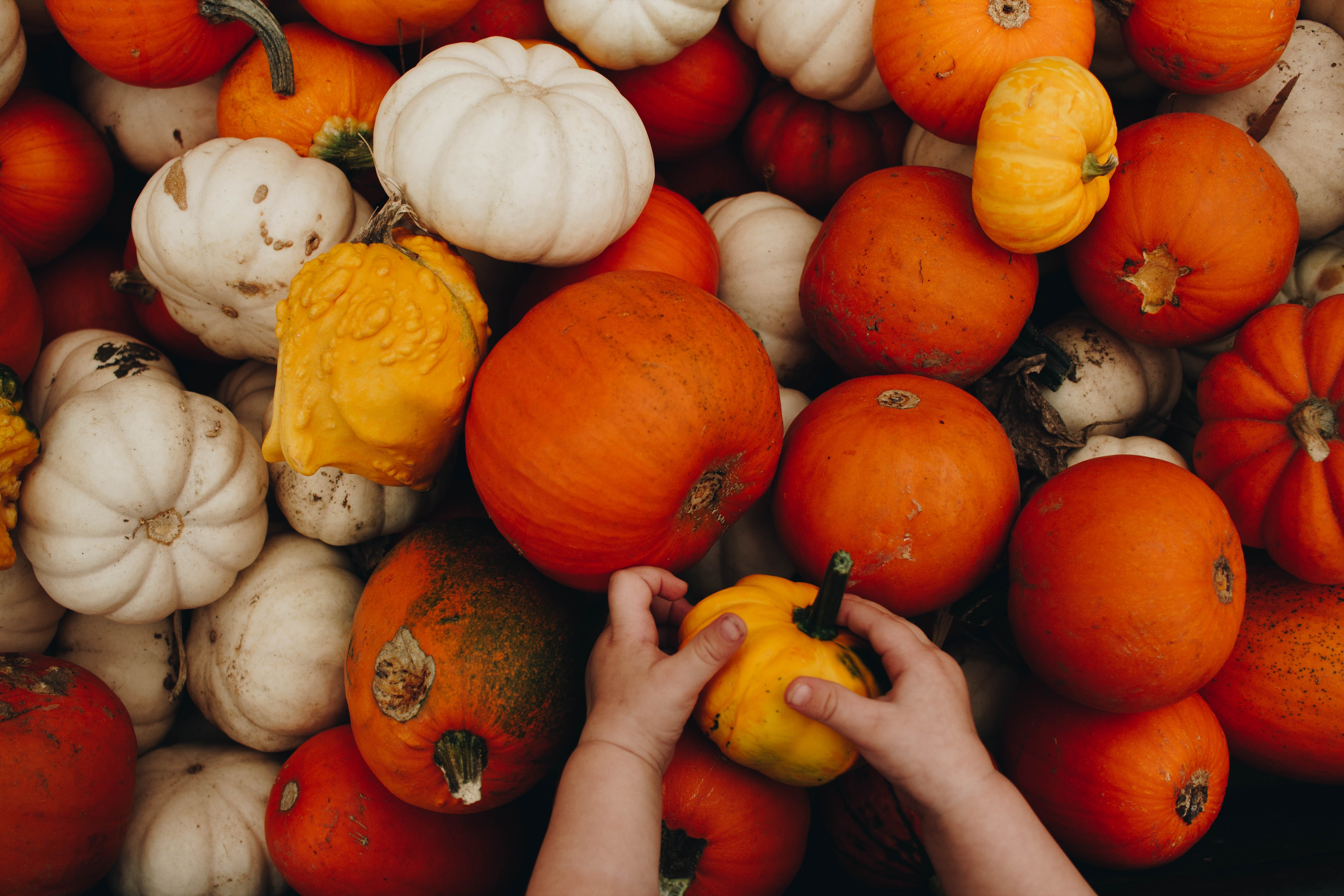 toddler holding small pumpkin near bunch of assorted-size pumpkins