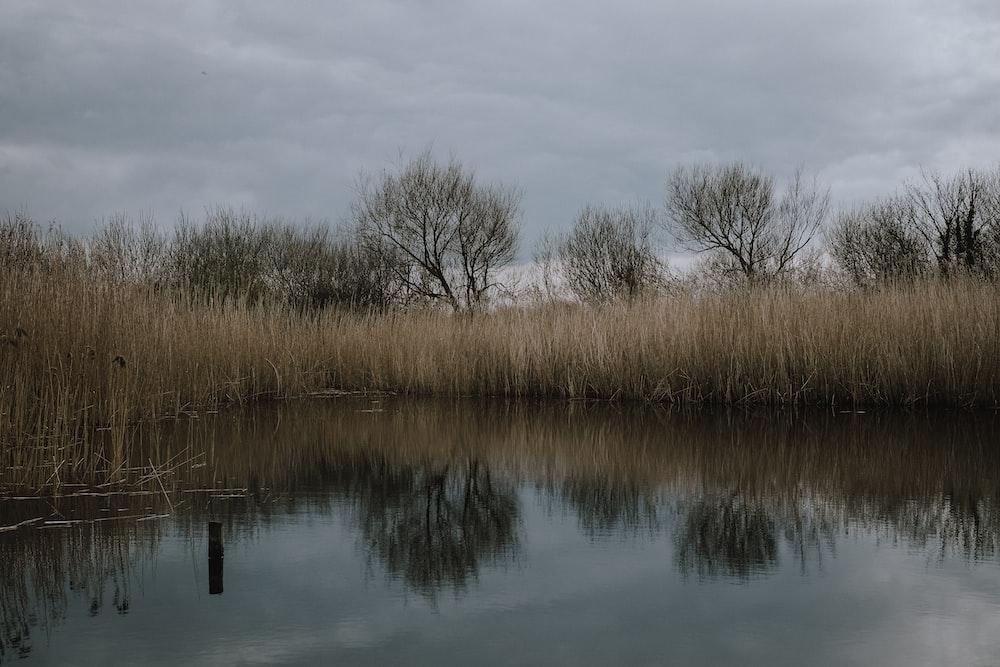 grass near body of water