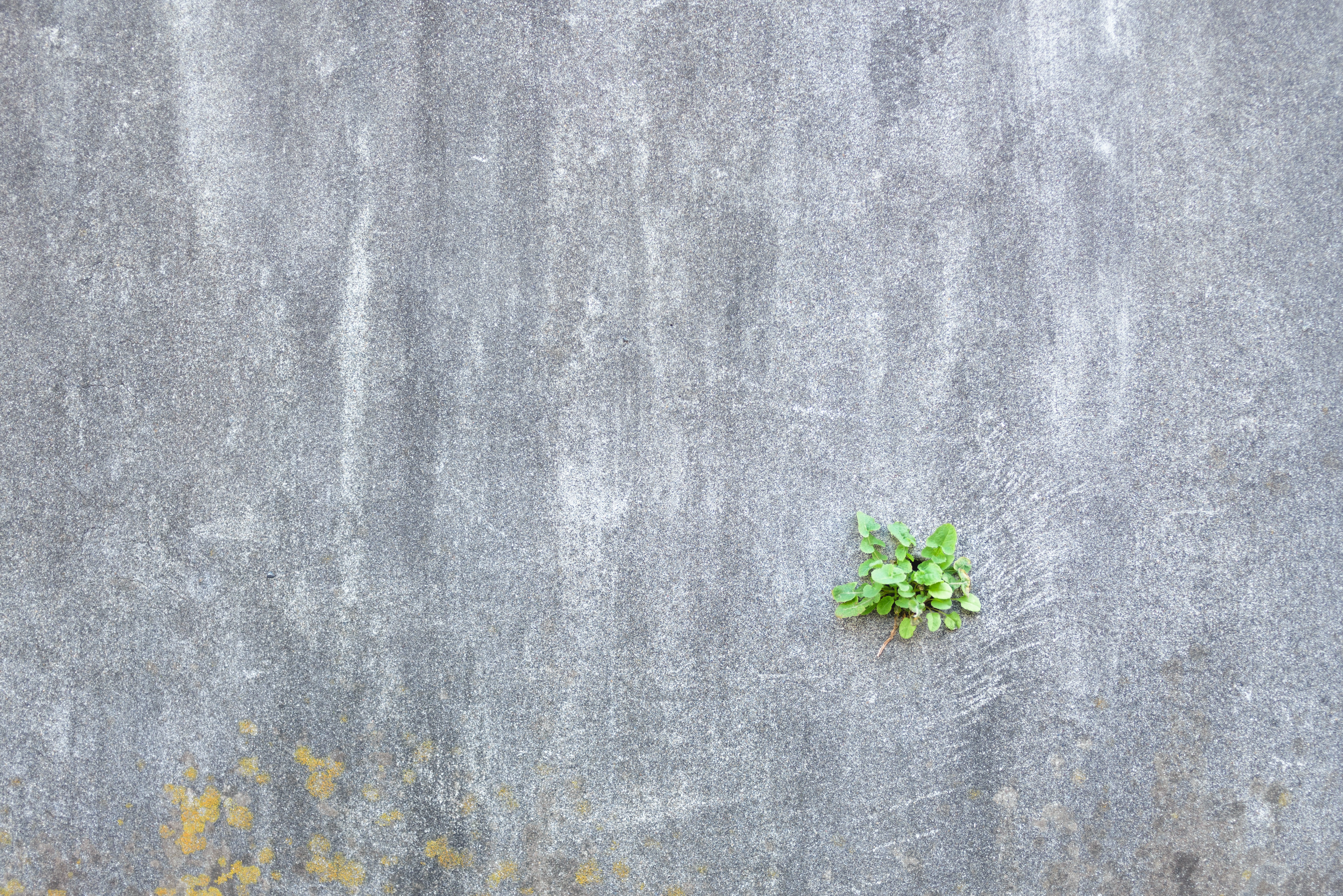 green leaves on gray concrete floor