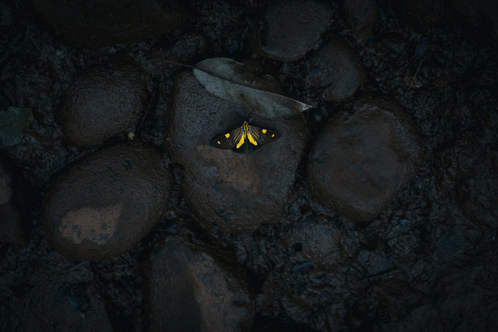yellow butterfly on stone