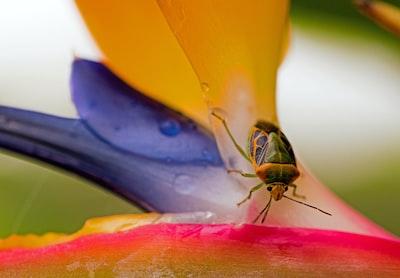 closeup photo of green and brown stinkbug