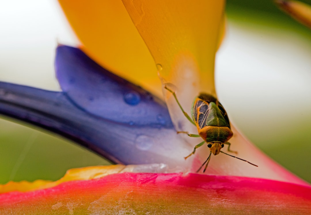 A bug visiting a bird of paradise flower, probably to sip nectar.