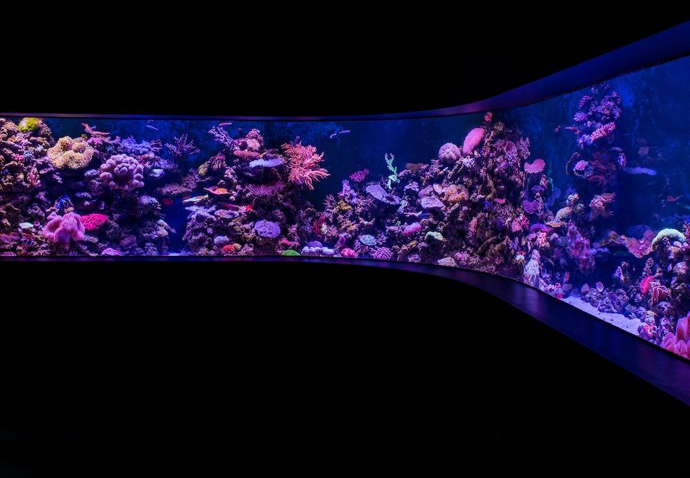school of pet fish