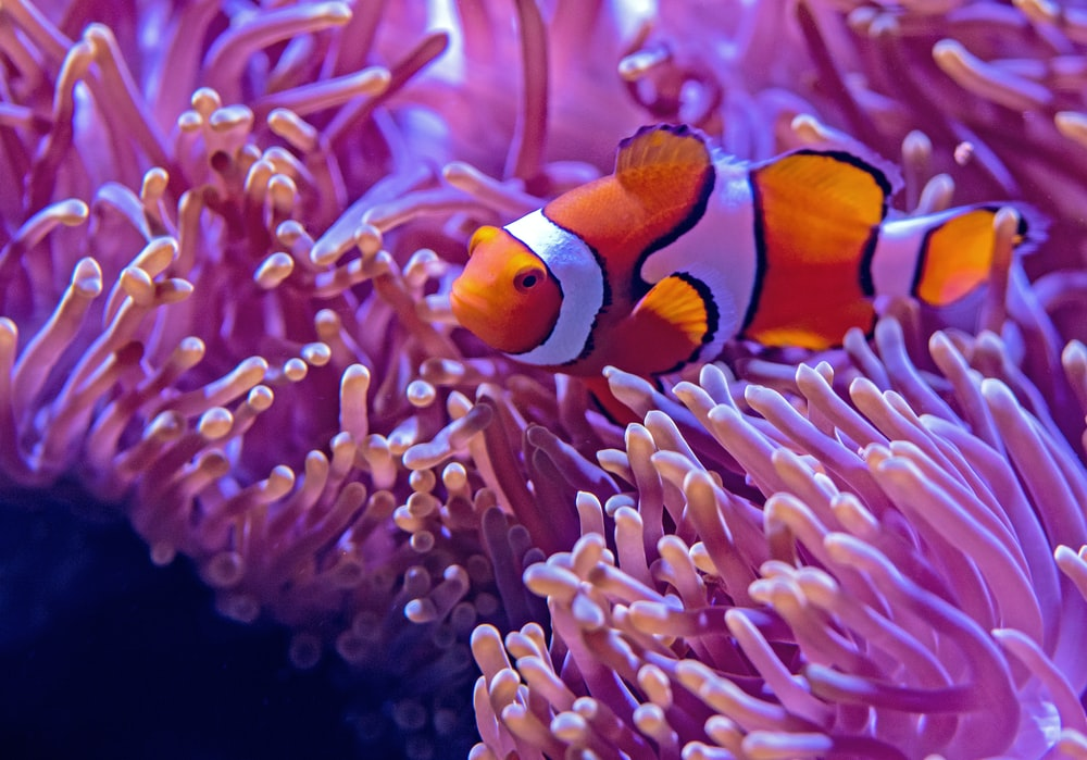orange and white fishes