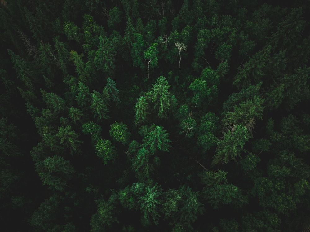 birds eye photo of forest