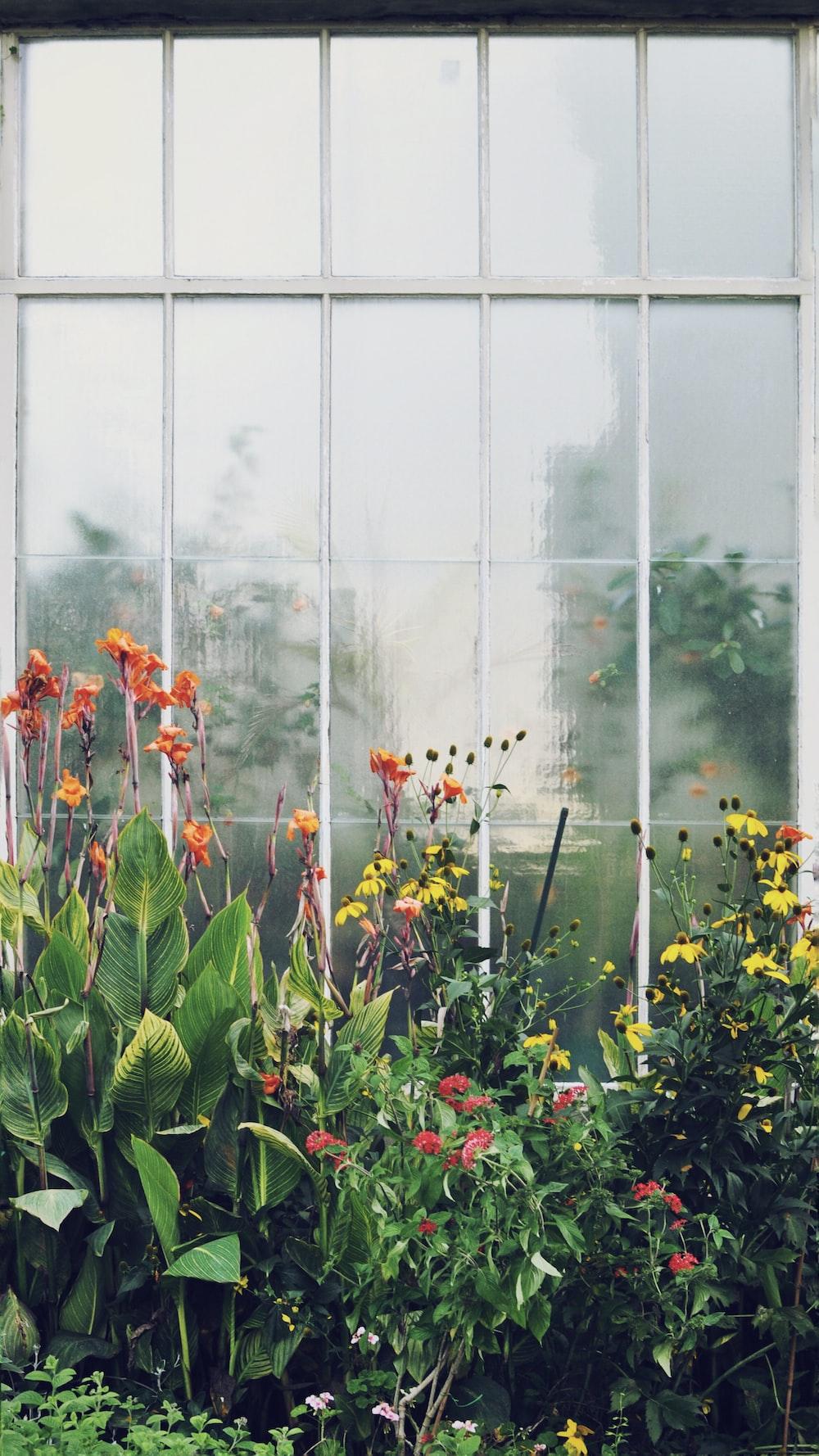 yellow and orange petaled flowers beside window - Columbus Botanical Garden