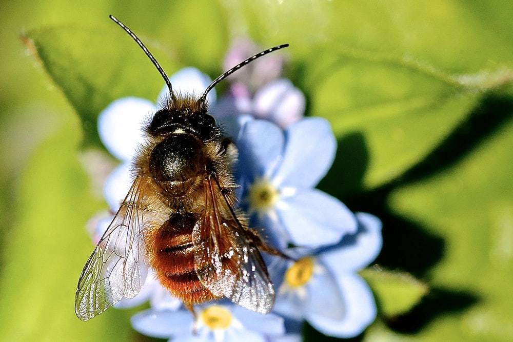 macro photography of yellow bee on blue flower
