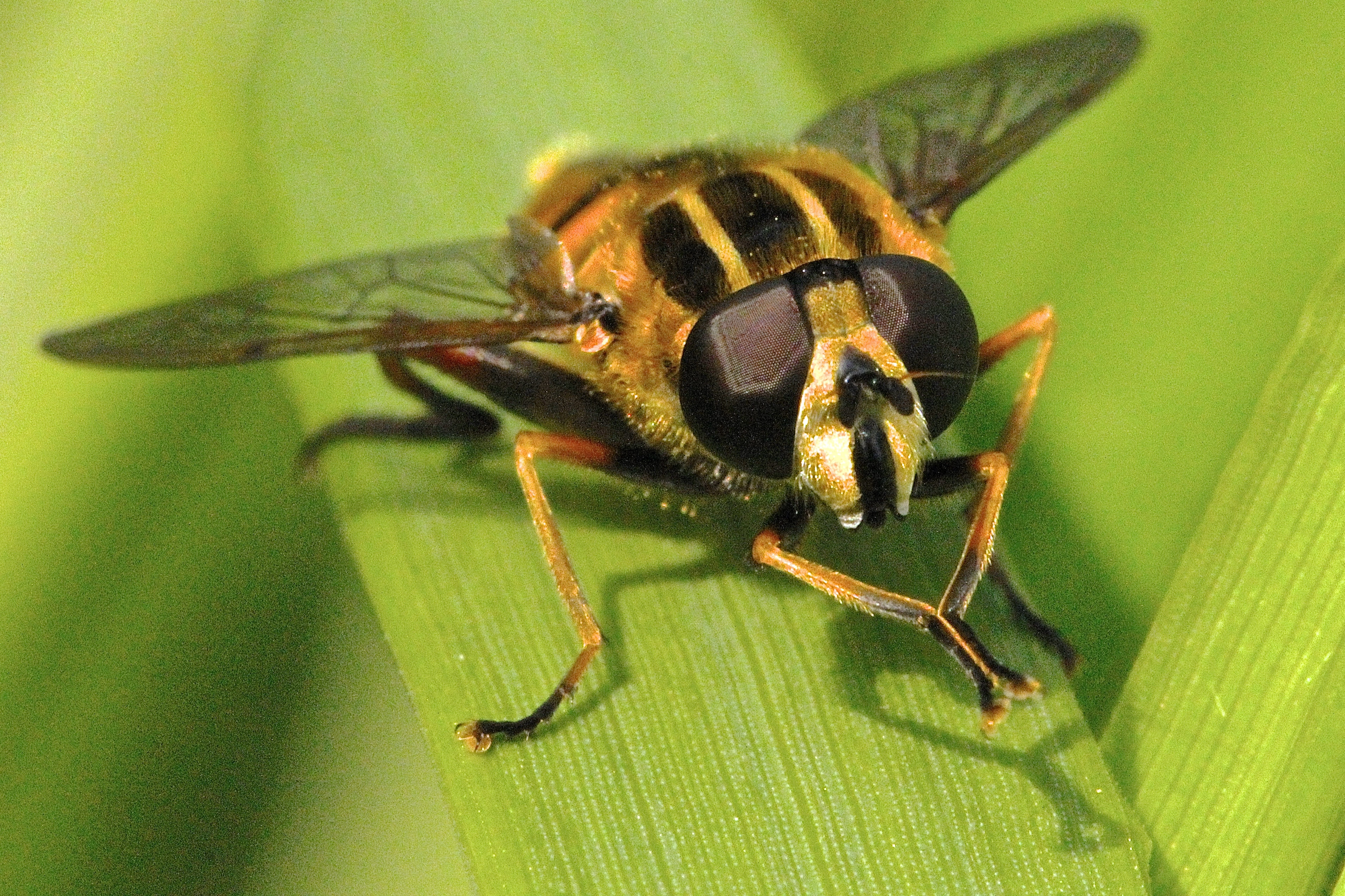 macro photography of brown and black insect