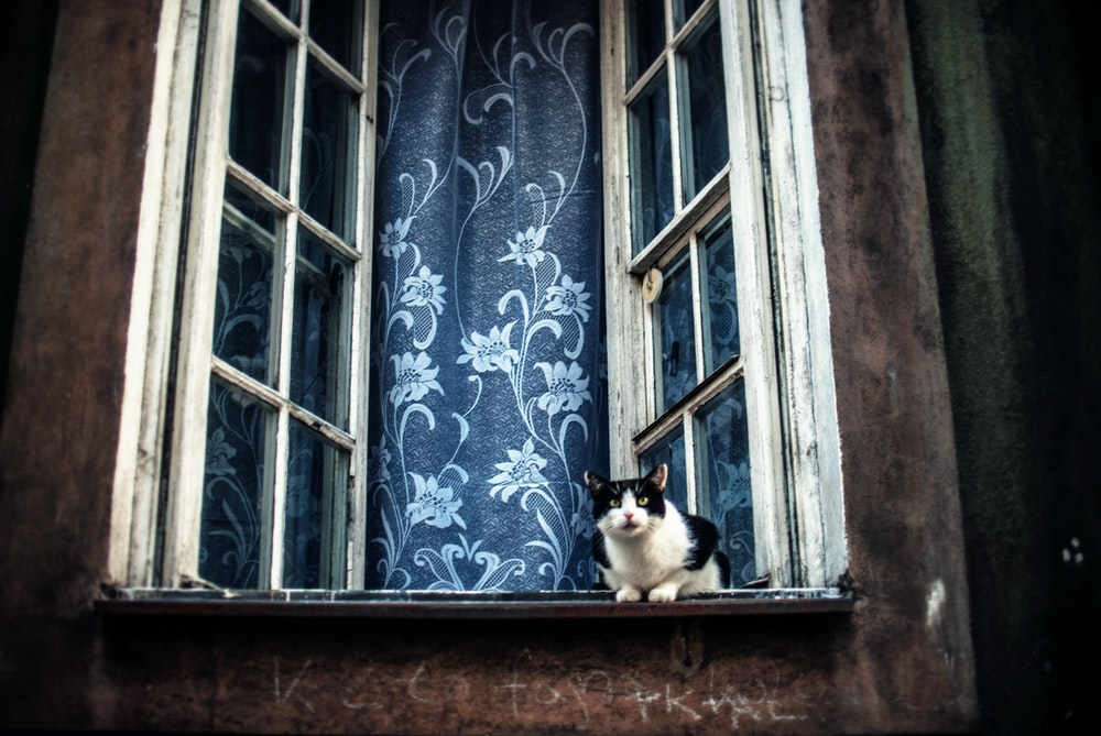 white and black cat leaping on opened window