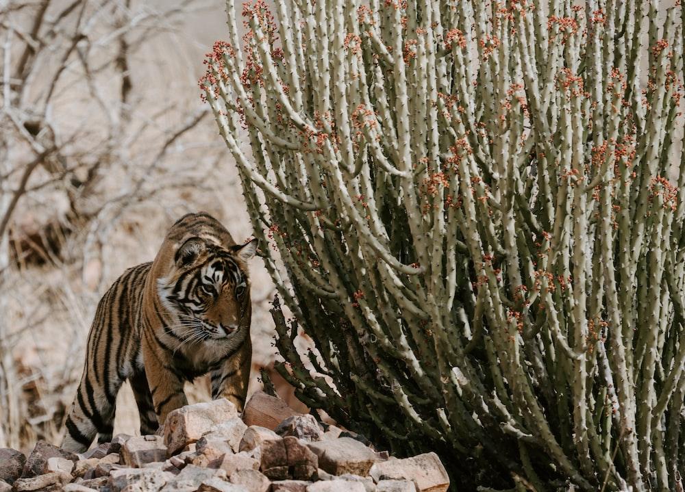 tiger near green plant