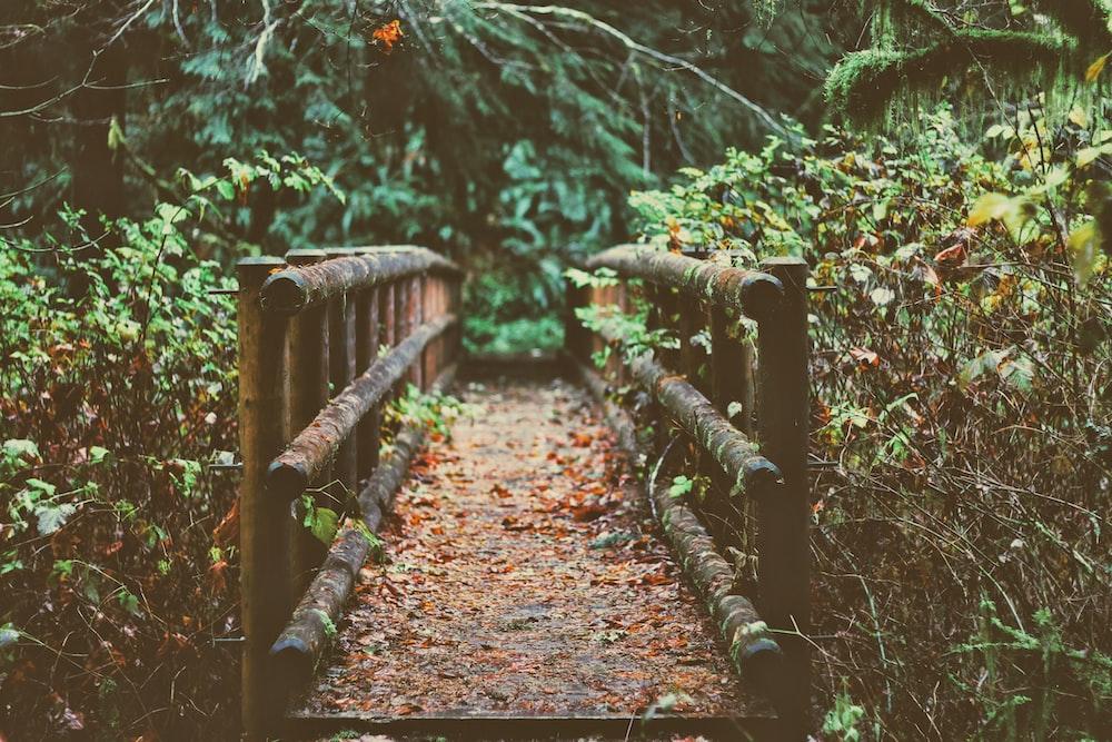 brown wooden bridge between trees