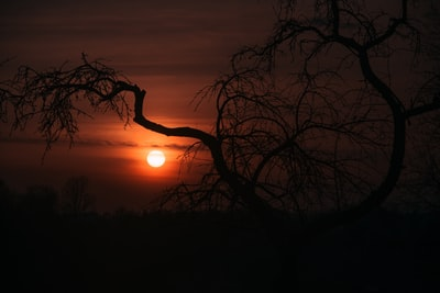 silhouette photo of bare tree atmospheric teams background
