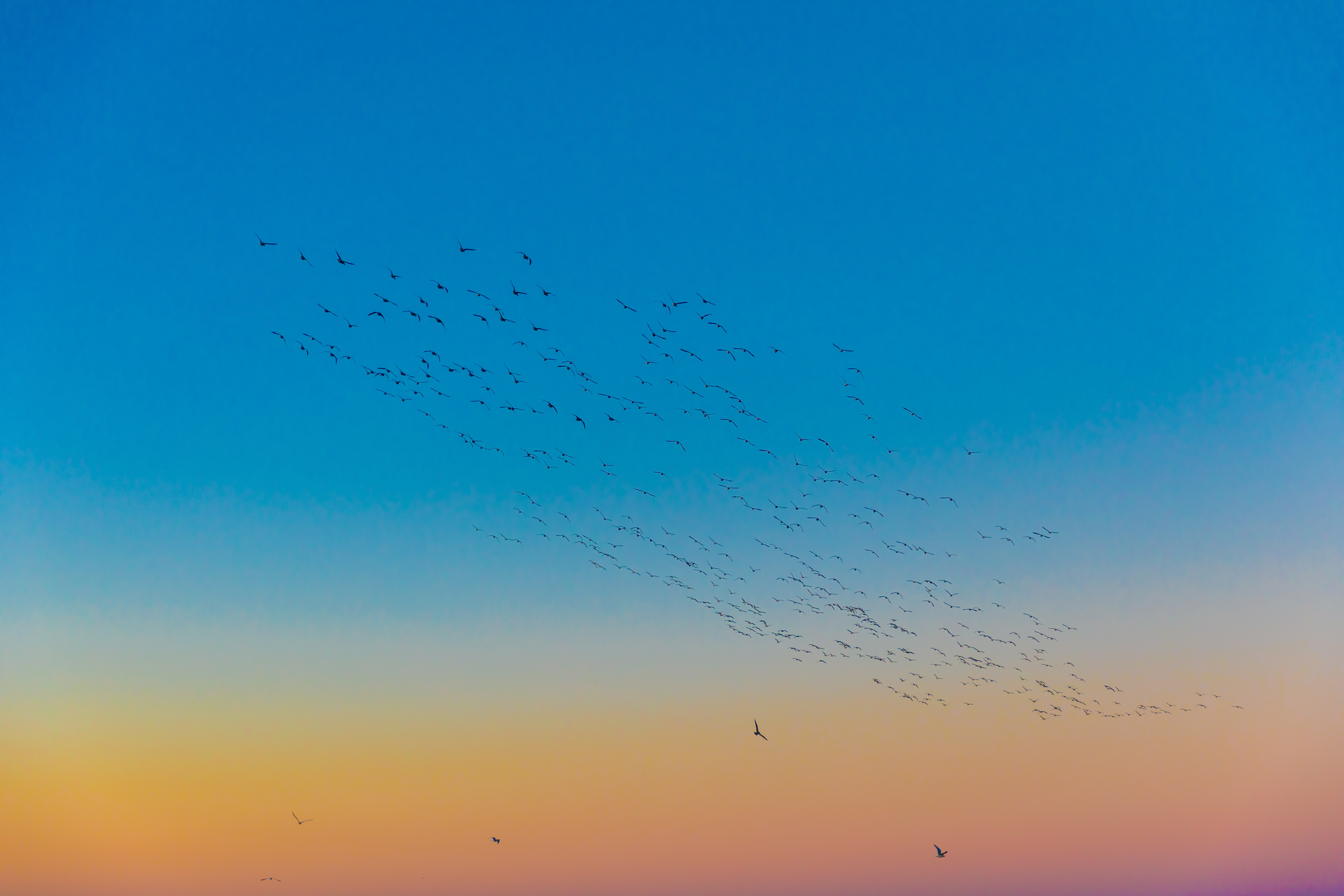 flight of birds soaring above air