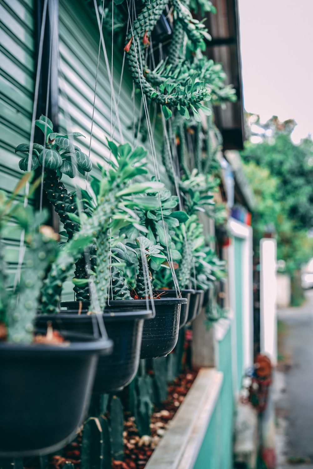 selective focus photography of hanging plants