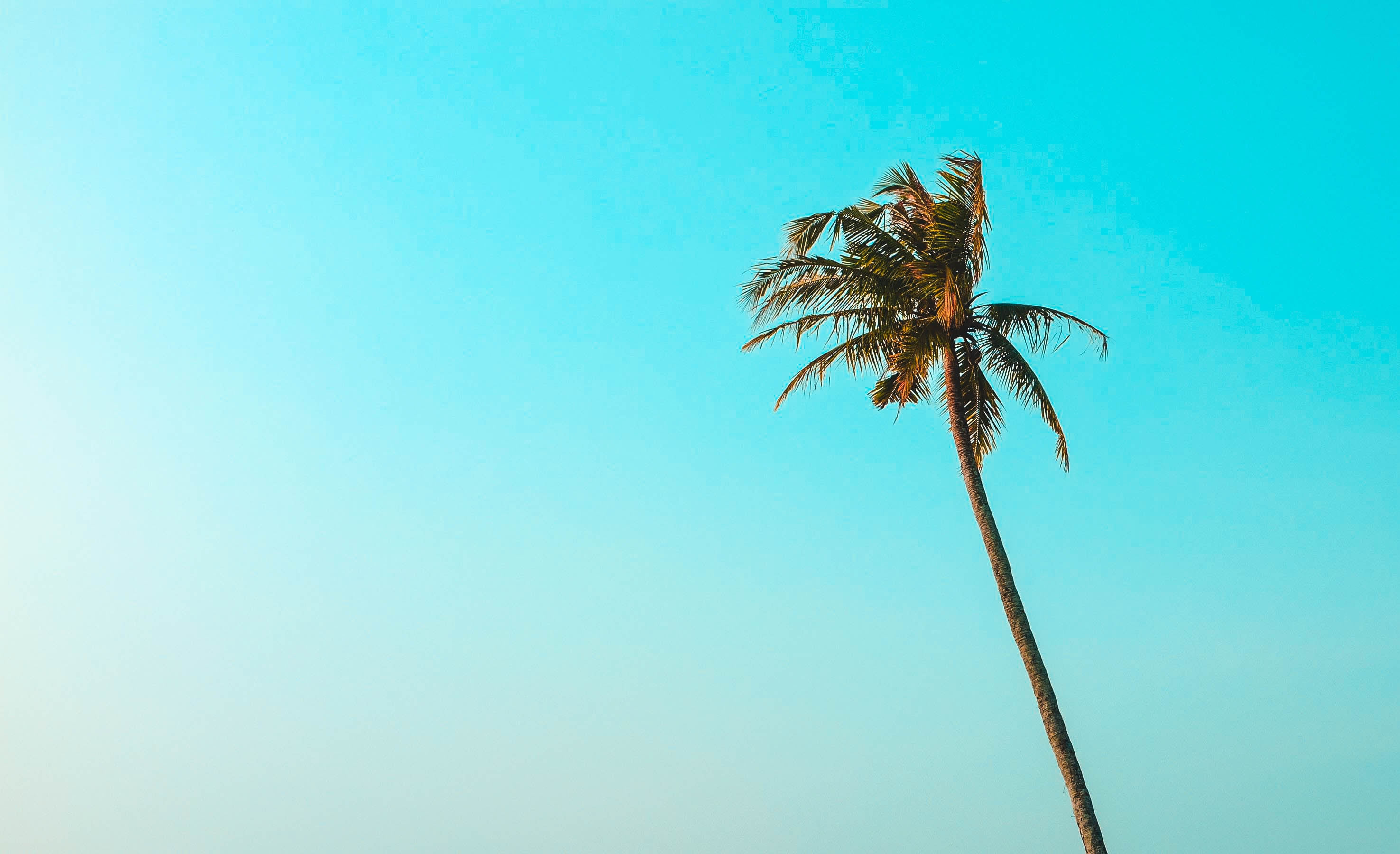 green leafed coconut tree under teal sky
