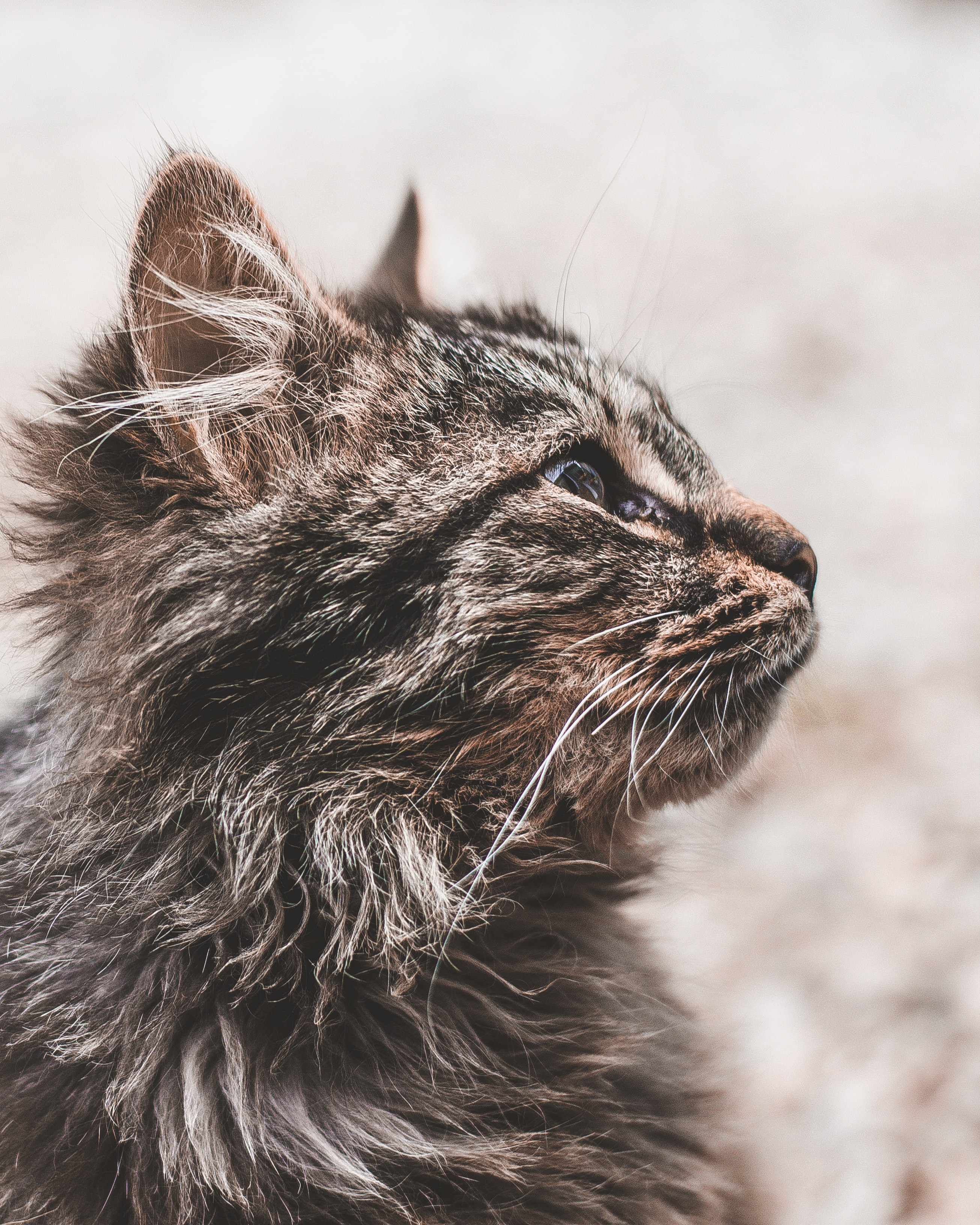 black and brown cat in selective focus photography