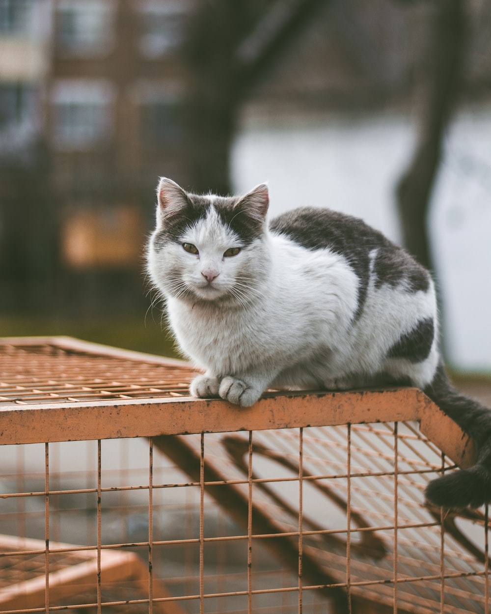selective focus photography of white and black cat