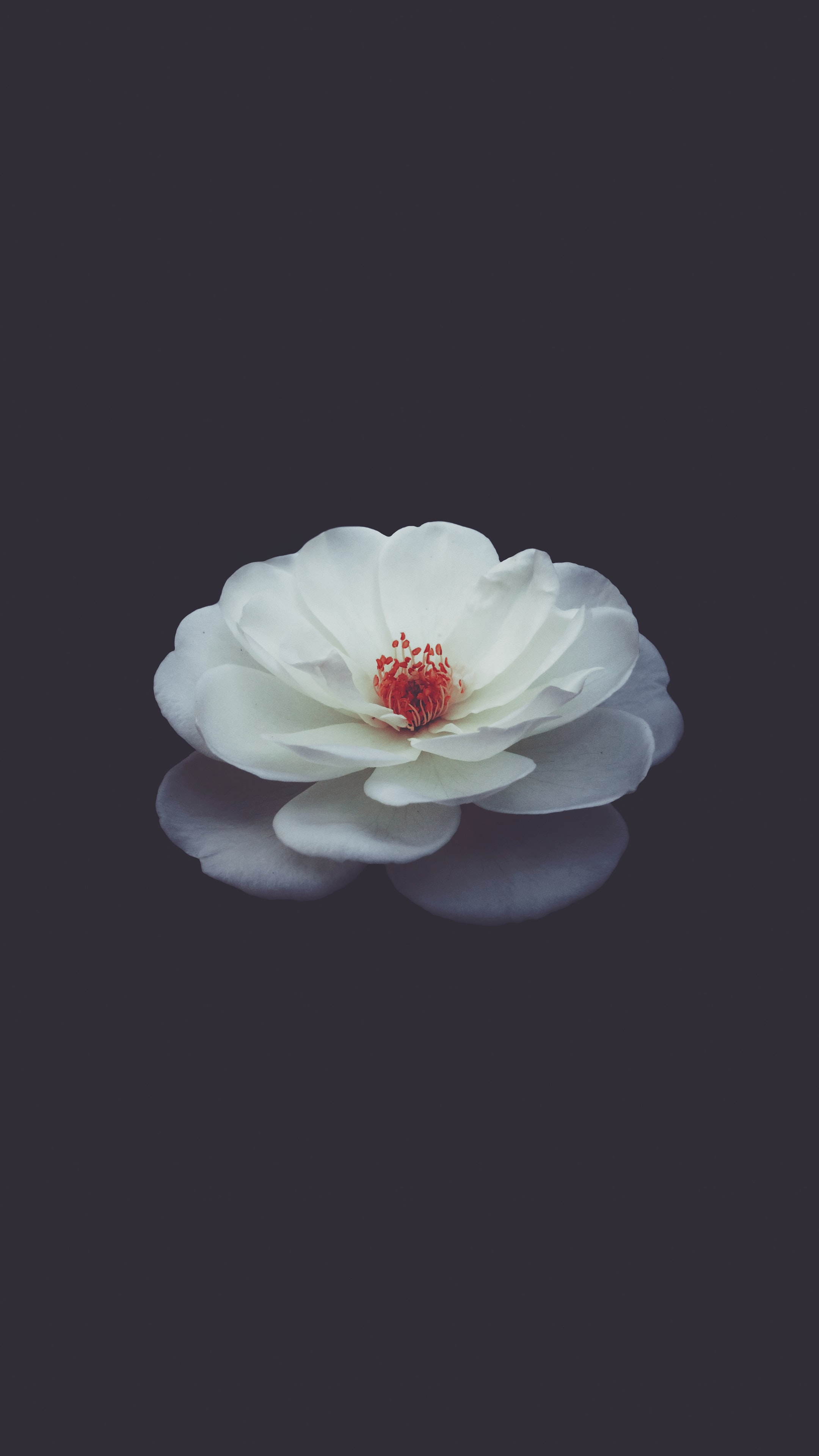 shallow focus photography of white petaled flower in water