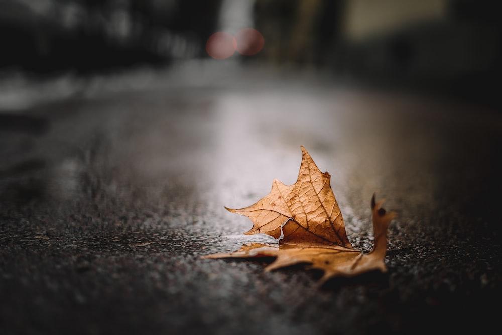 dried brown leaf