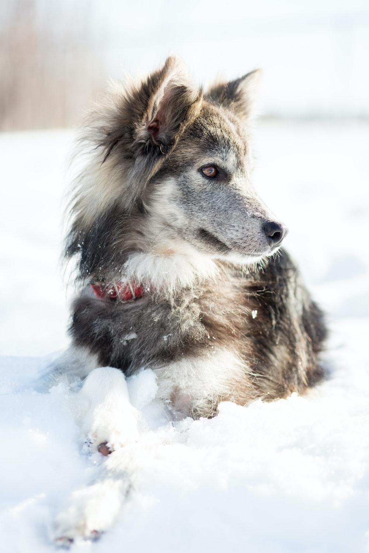 dog sitting on snow