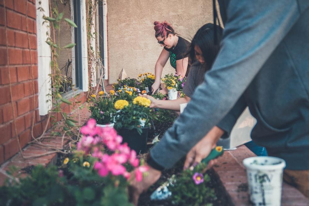 three people planting flowers