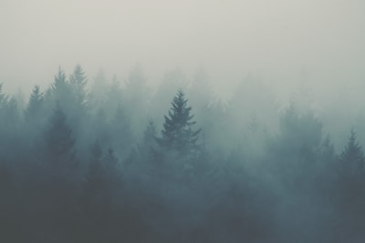 forest covered with fogs fog zoom background