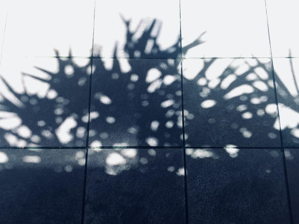 shadow of plant towards floor tiles