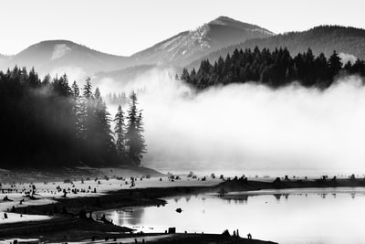 grayscale photography of lake near pine trees