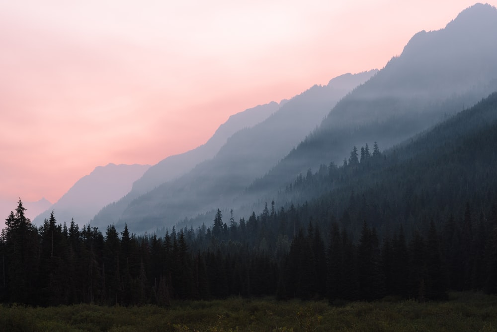 landscape photography of trees near mountains