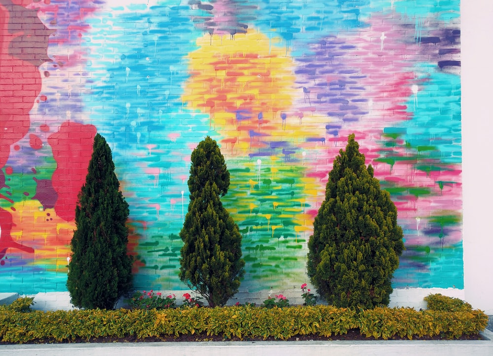 wall painted with colors behind plant
