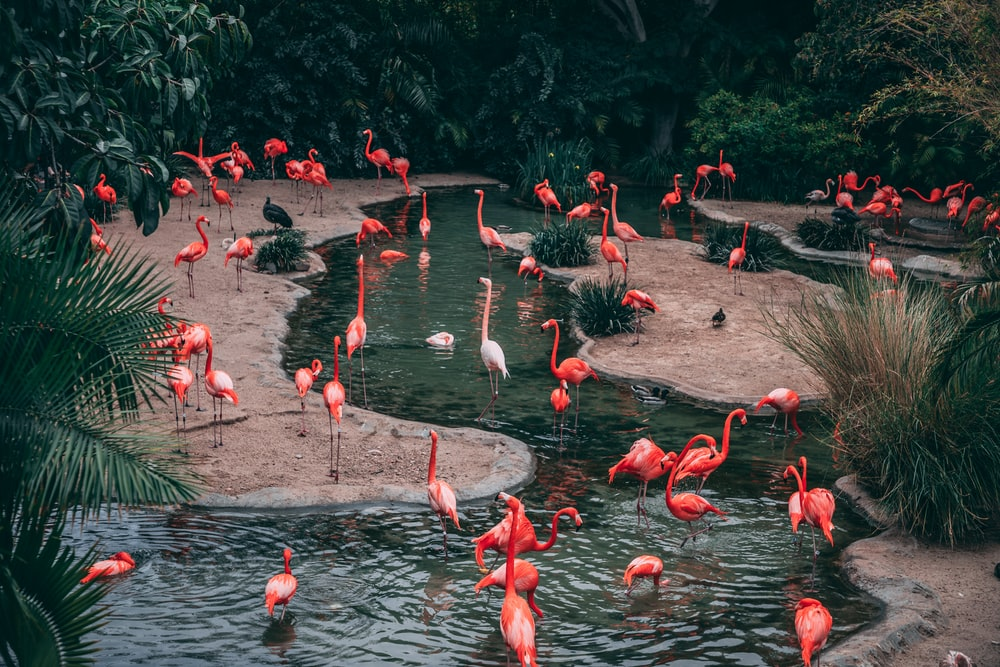 wildlife photography flock of flamingo