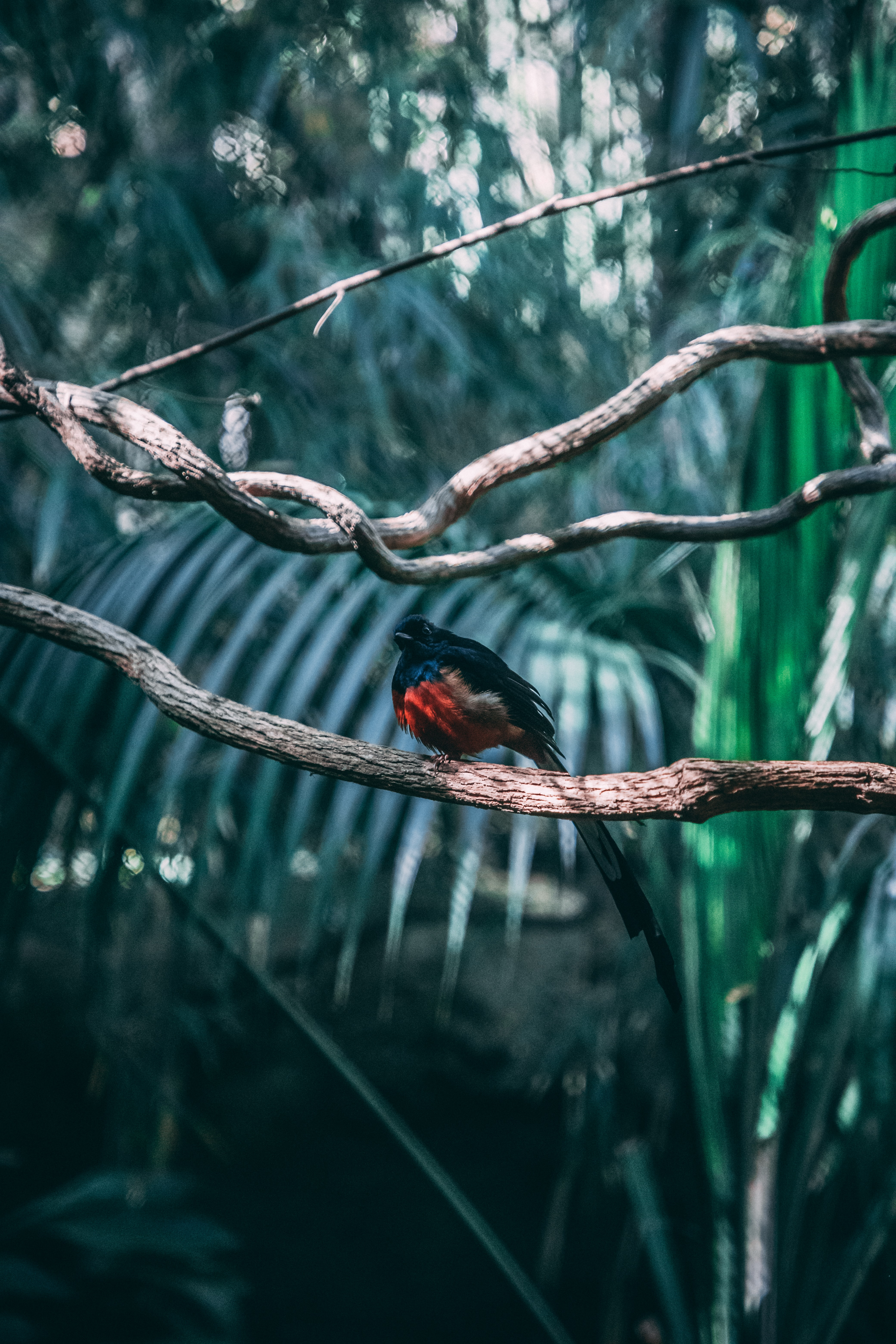 black and red bird on tree
