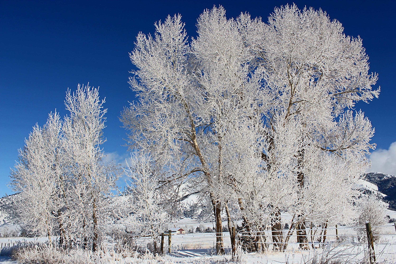 white bare trees under blue sky