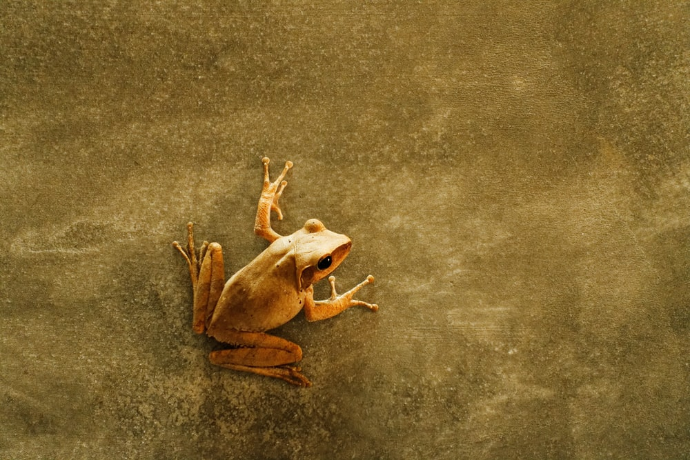 shallow focus photography of brown frog