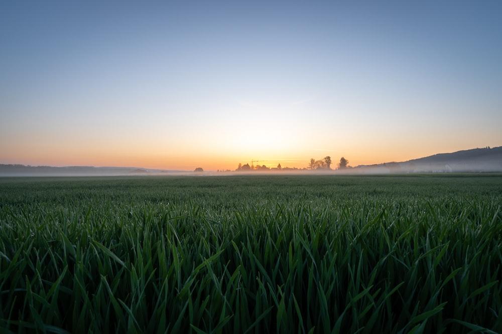 green grass field under sunset